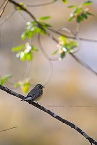 ムギマキ月間のおわり - healing-bird