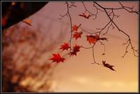 残秋 - 好い加減に過ごす2