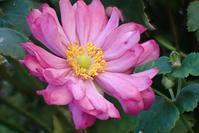 散歩道で出会った花たち - 里山の四季