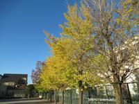 葛飾区の公園は「黄葉」で勝負? - 一場の写真 / 足立区リフォーム館・頑張る会社ブログ