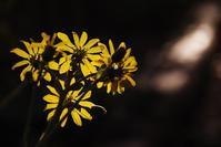 「淋しさを成長させるもの」 - 光と彩に、あいに。