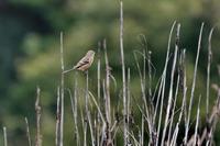 里山でいつもの鳥撮りです - 東海デジスコ倶楽部