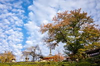 「清水寺の紅葉」 - ほぼ京都人の密やかな眺め Excite Blog版