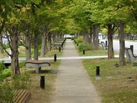 『せせらぎの並木テニテオを歩きながら・・・・・』 - 自然風の自然風だより