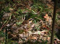 草の間を、、 - ぶらり探鳥