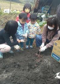 恒例のお芋掘り - がちゃぴん秀子の日記