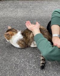 チコにお昼寝時流して良いと許可をもらった曲シリーズ #10 - COMPLEX CAT