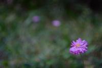 野に咲く花 - feel a season