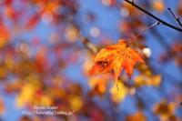 里も色づく秋 - 風の彩りー3