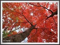 秋の観音沼 - キルトとステッチ時々にゃんこ