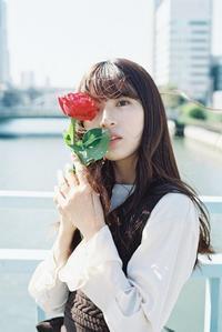 薔薇ポートレート その3 - photomo