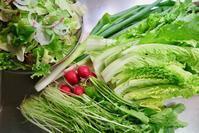 自家野菜で鍋材料に - 光さんの日常2