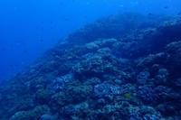 20.11.8荒れる前に! - 沖縄本島 島んちゅガイドの『ダイビング日誌』