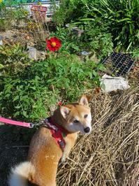 赤い花 - yamatoのひとりごと