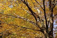黄葉と紅葉の競演 - kisaragi