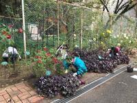 2020年11月・月例会 - 駒場バラ会咲く咲く日誌