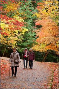 紅葉散策 - 薫の時の記憶