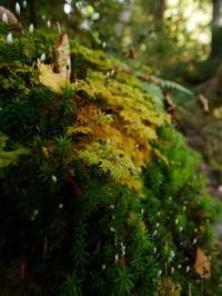 乗鞍高原 苔の森 - tokoya3@