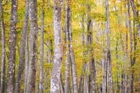 美人林 - 松之山の四季2