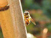 蜜を求めて - 小さなお庭のある家3