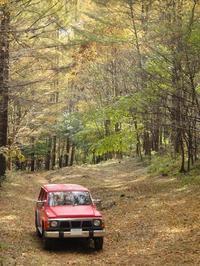 秋の林道散策。 - 続・車ヲタのヨタばなし