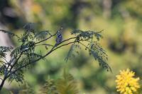今季初のアリスイさん - 鳥と共に日々是好日②