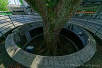 藤崎台県営野球場の巨樹 - Mark.M.Watanabeの熊本撮影紀行