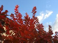 天気が崩れる前に - natural garden~ shueの庭いじりと日々の覚書き