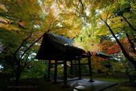 長野市昌禅寺さんの紅葉その2 - 野沢温泉とその周辺いろいろ2