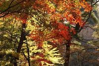 シアトルの森 - kisaragi