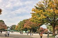 秋色に染まりつつある上野へ - 猫の部屋