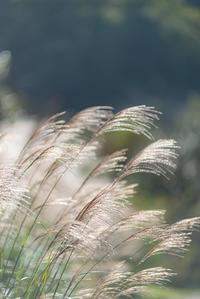 秋のキラキラ - 気ままにお散歩