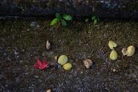 落ち葉 - feel a season