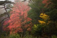 霧雨の紅葉 - ぽとすのくずかごⅡ
