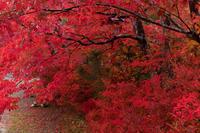 2020紅葉きらめく京都早めに色づいた鍬山神社 - 花景色-K.W.C. PhotoBlog