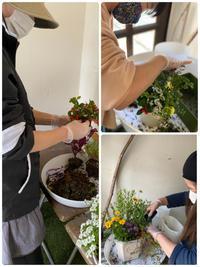 ギャザリング、寄せ植えの季節です - 花温♪ の花話