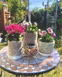 このバラの名前がわかりますか?と、待機苗の植え付け♡ - 薪割りマコのバラの庭
