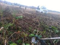 小豆、大豆刈り取りそして。 - 長福ファームのブログ