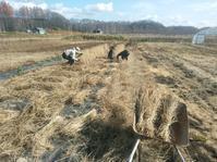陸稲収穫 - 長福ファームのブログ