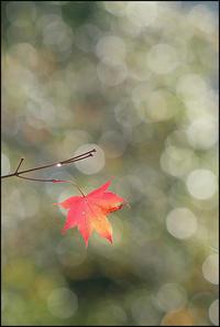 晩秋のメロディー - 薫の時の記憶