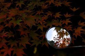 それも秋・これも秋 -