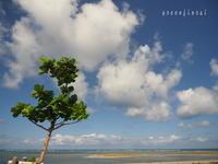 2020.09沖縄⑫-1 おまけの一日、ドライブへ - Green Floral
