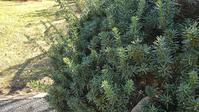 キャラ剪定 - ウィズコロナのうちの庭の備忘録~Green's Garden~