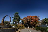 先陣切っての紅葉@京都府立植物園のケヤキ並木 - デジタルな鍛冶屋の写真歩記