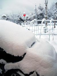 稚内は雪景色に - 北海道中央NOSAI 宗谷支所 非公式 ブログ