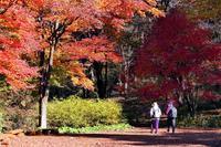 紅葉狩り・・・赤城自然園(1)今が見頃。あと一週間位か - 『私のデジタル写真眼』
