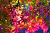 紅葉狩り・・・赤城自然園(2)彩色絢爛&多重露出で遊ぶ♪ - 『私のデジタル写真眼』