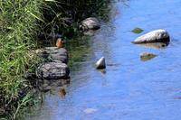 おかべの野鳥- 初冬 - - やきつべふぉと