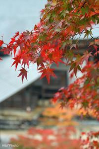 紅葉 #2 - Hibi*Photo ~Second season~