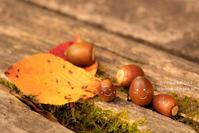 実りの秋 - 日々の欠片を紡ぐ日々